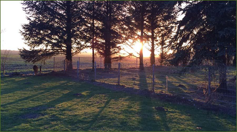 Urlaubseindrücke Haus Friesenglück in Kolkerheide, Nordfriesland - Sonnenuntergang im Garten