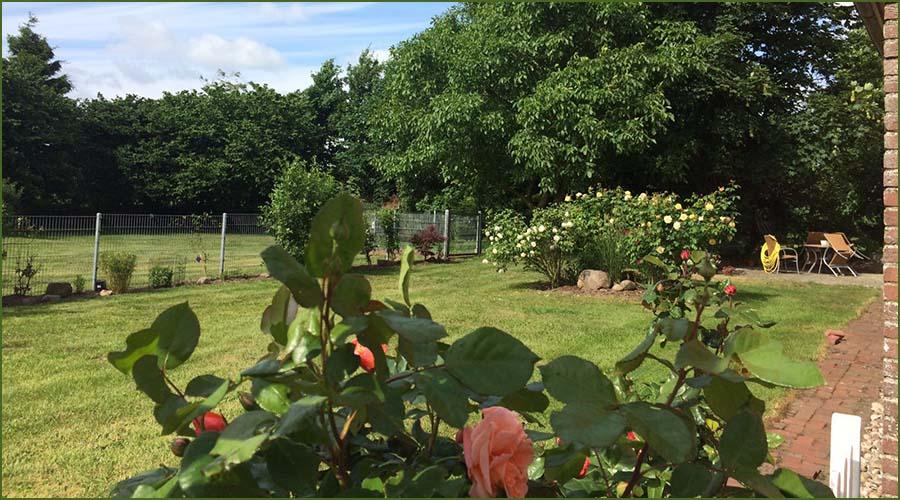 Urlaubseindrücke Haus Friesenglück in Kolkerheide, Nordfriesland - Blütenpracht im Hausgarten 5