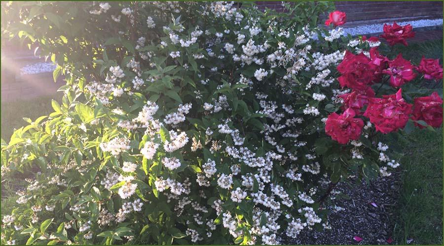 Urlaubseindrücke Haus Friesenglück in Kolkerheide, Nordfriesland - Blütenpracht im Hausgarten 3