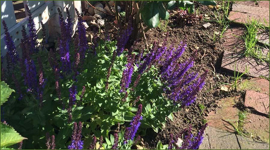 Urlaubseindrücke Haus Friesenglück in Kolkerheide, Nordfriesland - Blütenpracht im Hausgarten 1